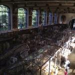 古生物学・比較解剖学陳列館