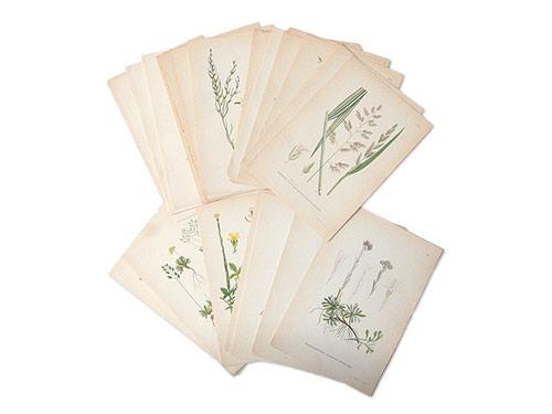 古い植物解剖図